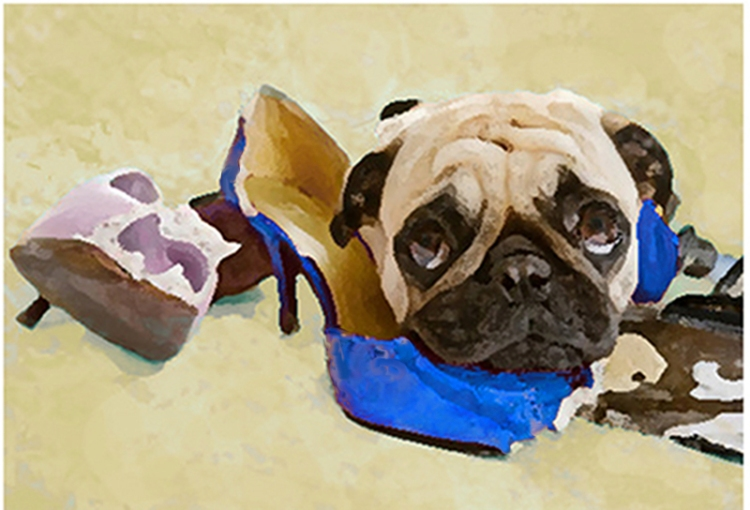 800 painting pug eating shoes